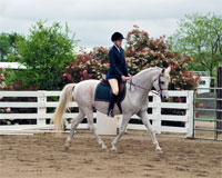 Competitor at schooling show